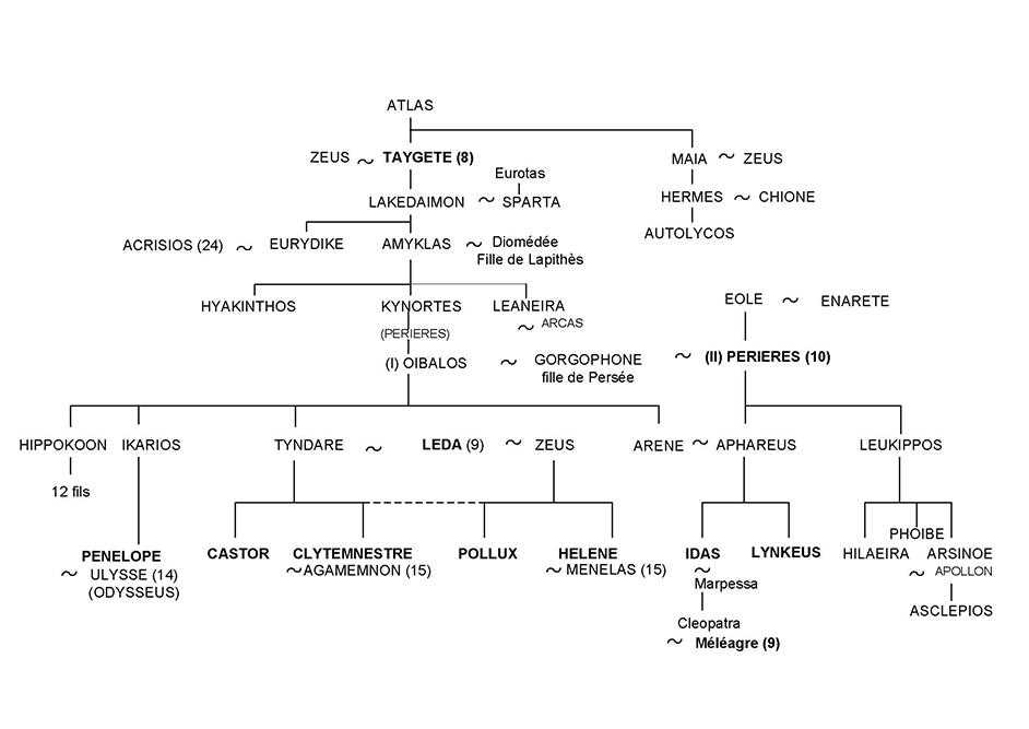 Pénélope, Castor et Pollux, Clytemnestre et Hélène - Arbre généalogique 13 - Mythologie grecque